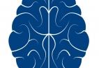 Illustration of cross-section of brain